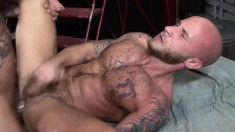 Tattooed gays chew on their rods before sliding it in a tight ass